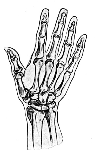 hand bones colouring pages