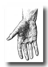 Anatomy of the Hand - Creases Upon the Front of the Hand and Digits