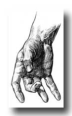 Anatomy of the Hand - Showing Formation of Creases or Lines of Flexion in the Skin of Hand and Digits