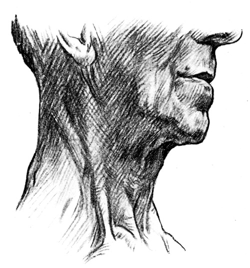 Anatomy of the Neck - Surface Markings Upon the Neck of an Old Man - Side View