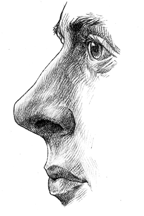 Anatomy of the Nose - Columna Nasu with the Upper Lip