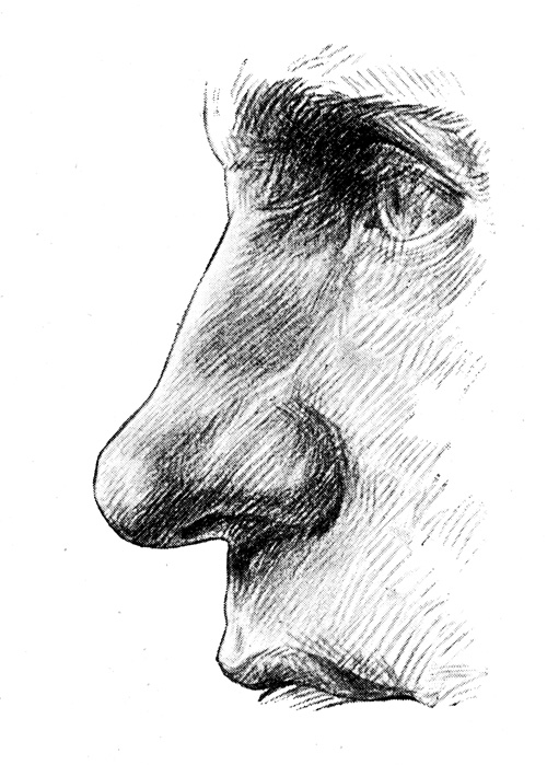 Anatomy Of The Nose Columna Nasu With The Upper Lip