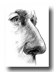 Anatomy of the Nose - Various Nose Types #2