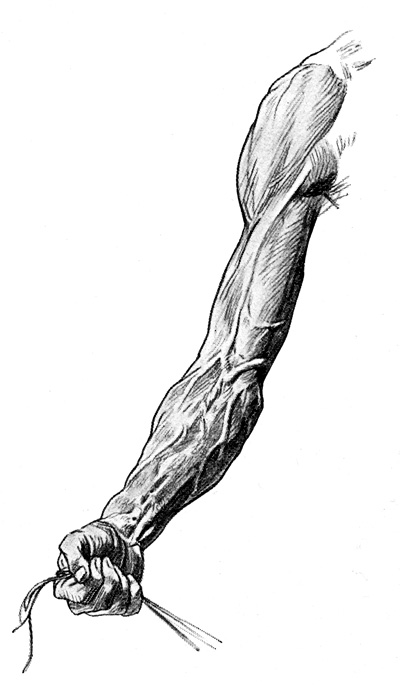 Arm Muscles - The Right Upper Extremity with Surface Markings of the Muscles, Tendons, and Veins