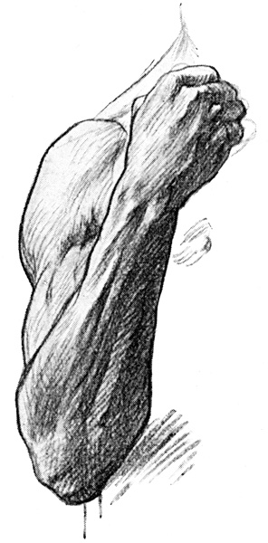 Arm Muscles - The Back of the Forearm and the Hand