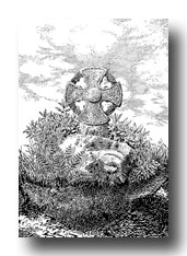Celtic Cross Drawings - Pencarrow, Egloshayle