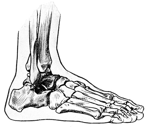 Foot Anatomy - Bones of the Right Foot - Outer Side