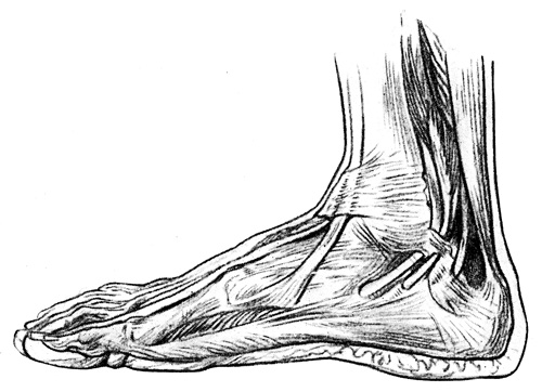 foot anatomy coloring pages - photo#19