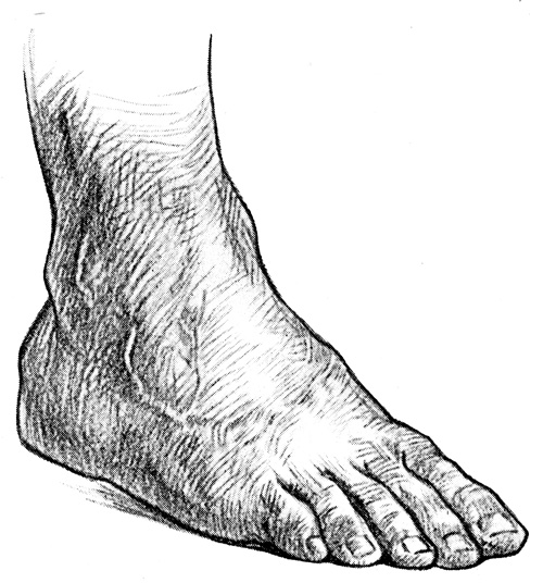 Foot Anatomy - The Dorsum of the Foot #1
