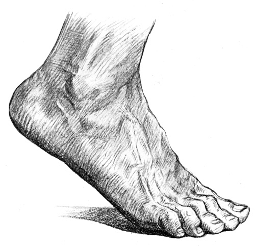 Foot Anatomy - The Dorsum of the Foot #2