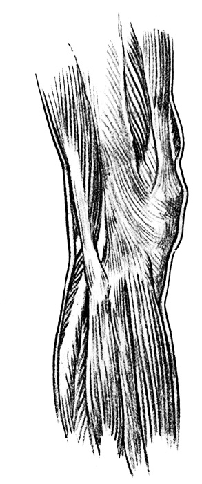 Knee Anatomy - The Outer Side of the Knee