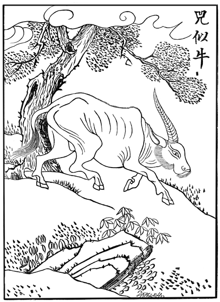 Mythical Creatures - The Sz, or Malayan Rhinoceros