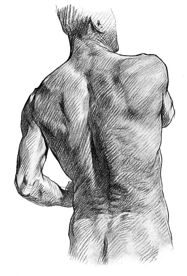 Shoulder Anatomy - The Muscular Prominences on the Back of the Trunk, Buttock, and Neck