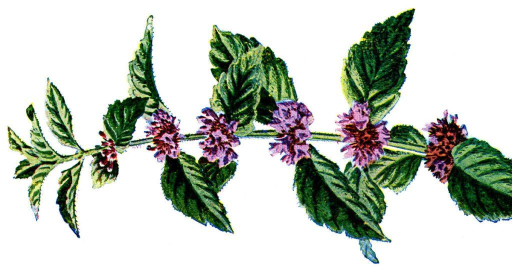 Common Wildflowers