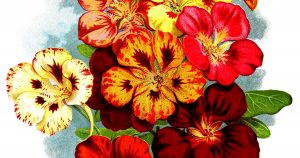 Red Flower Images