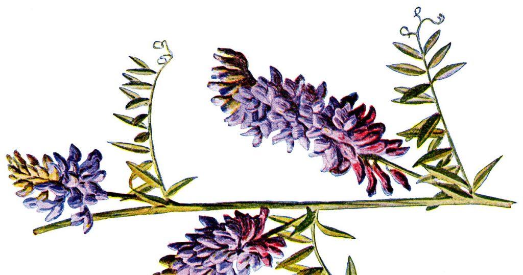 Wild Flower Pics