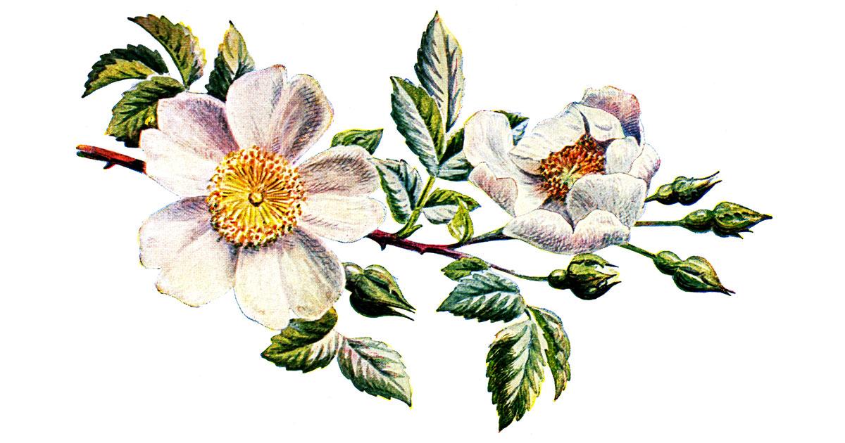 Bulbous Plants  Letters