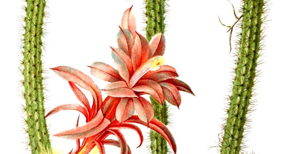 Cactus Images Clip Art