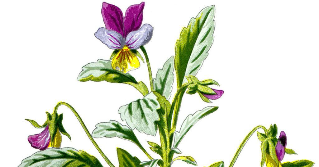 Flower Pics
