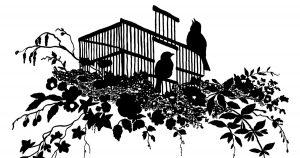 Bird Silhouette Images