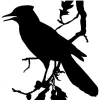 Bird Silhouettes Album