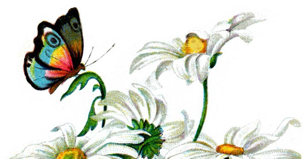 Drawings of Butterflies