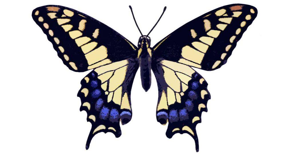 Pictures of Butterflies