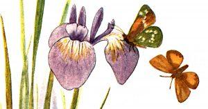 Types of Butterflies