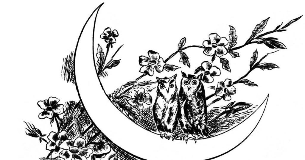Cartoon Owl Pictures