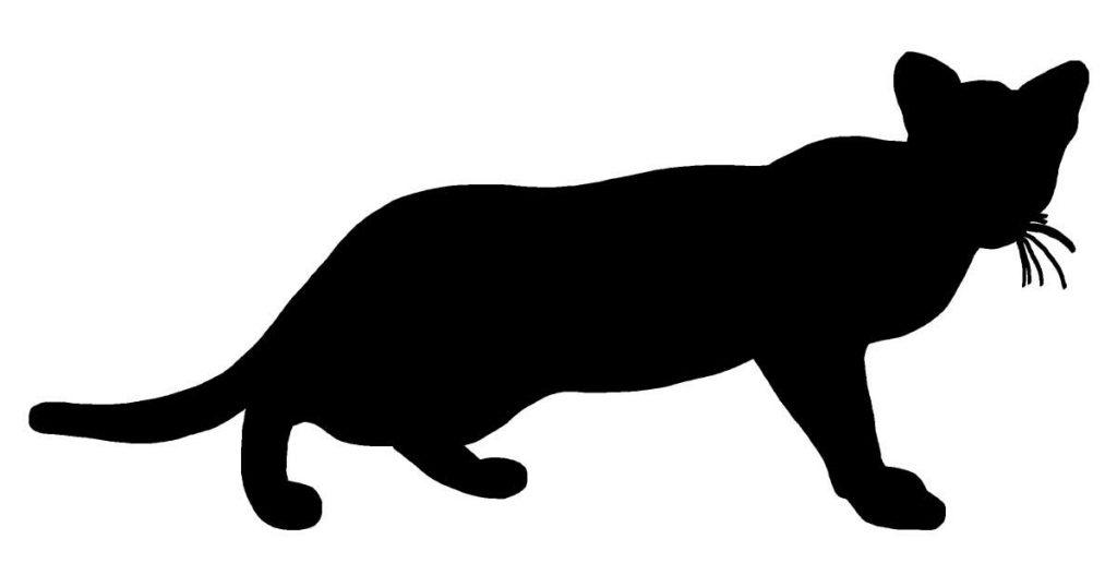 Cat Silhouette Images