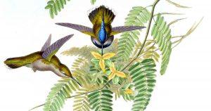 Drawings of Hummingbirds
