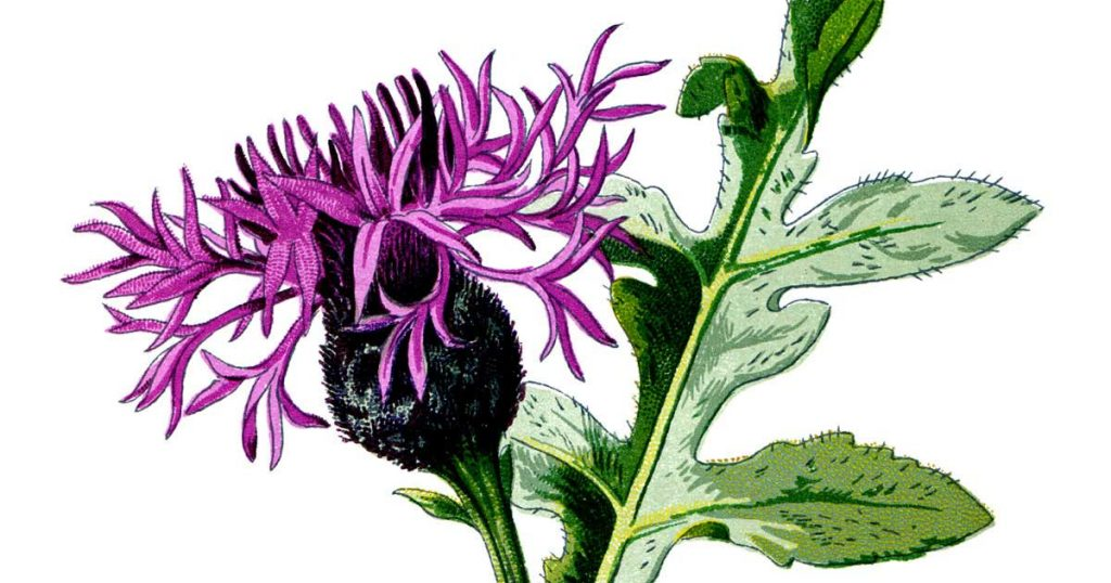Flower Drawing Images