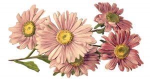Flower Graphics
