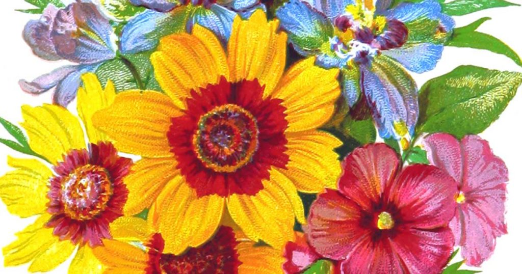 Public Domain Images - Flowers, Plants and Trees