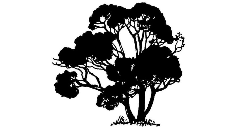 Free Tree Silhouettes