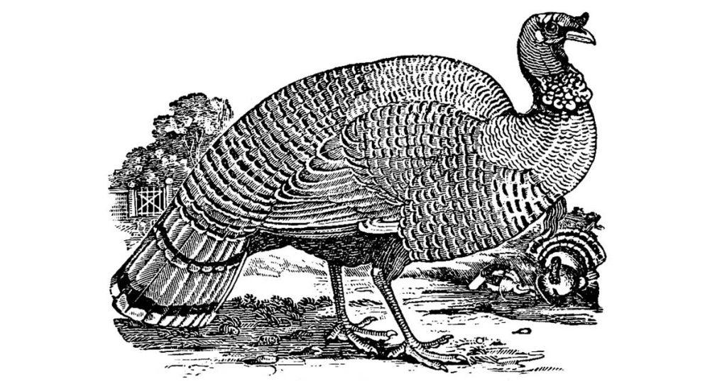 Turkey Drawings