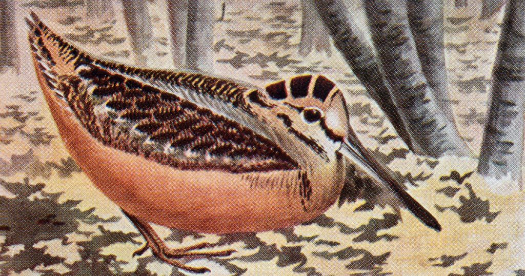 Clipart Of Birds
