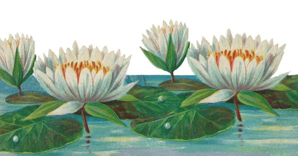 Water Lilies Fb