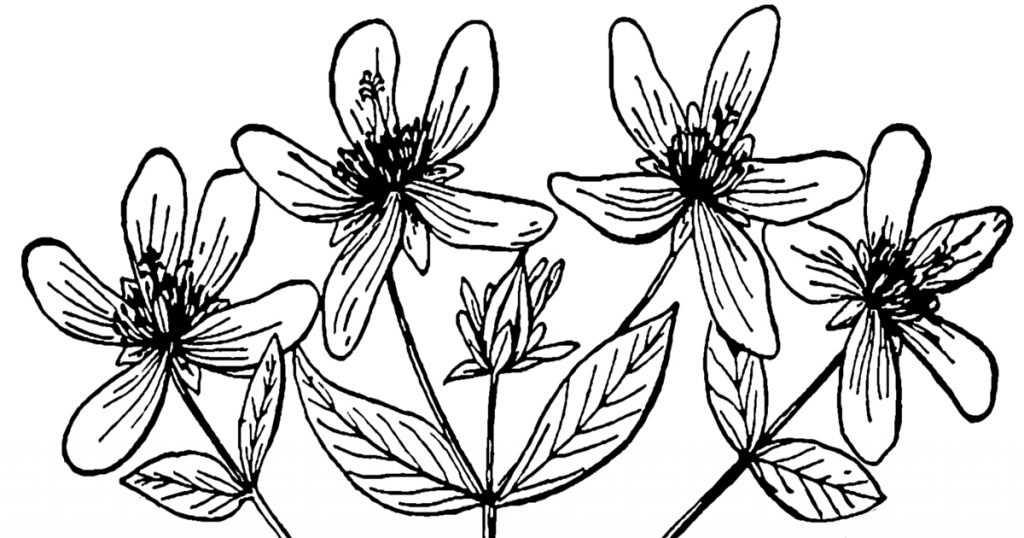 Black And White Clip Art Of Flowers