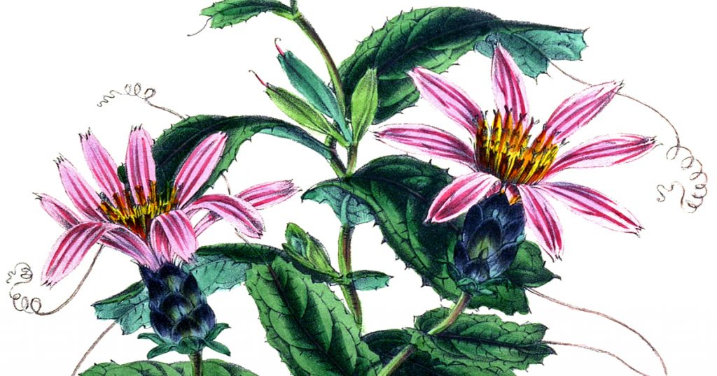 Drawings Of Beautiful Flowers