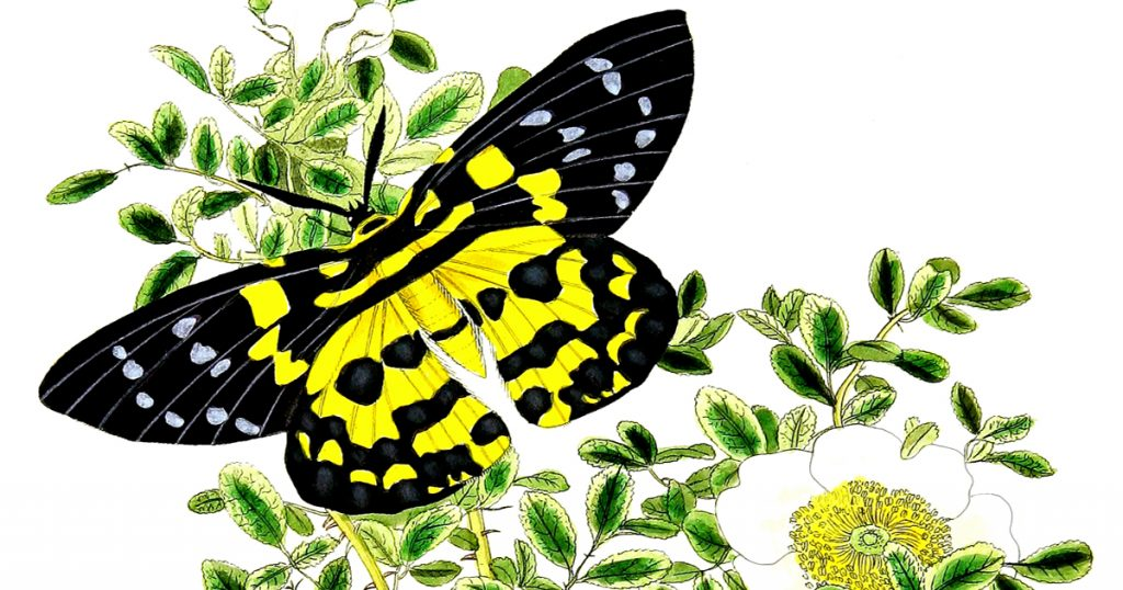 Drawings Of Flowers And Butterflies