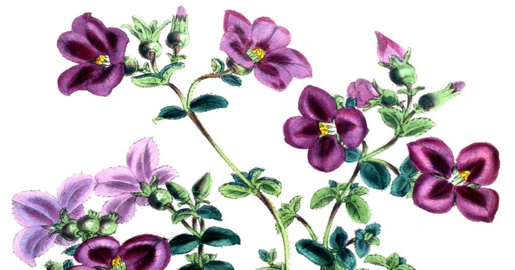 Color Drawings Of Flowers