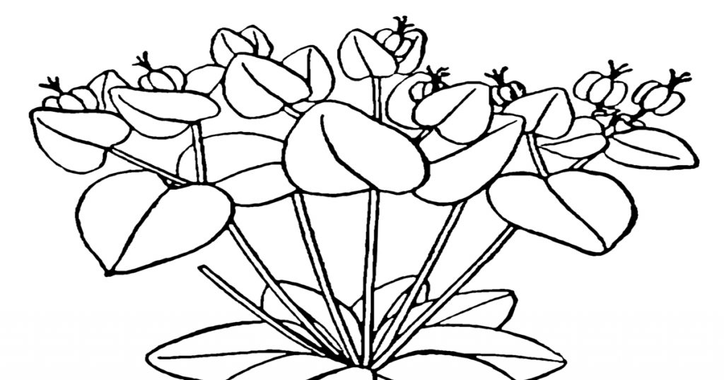 Pictures Of Flowers To Color